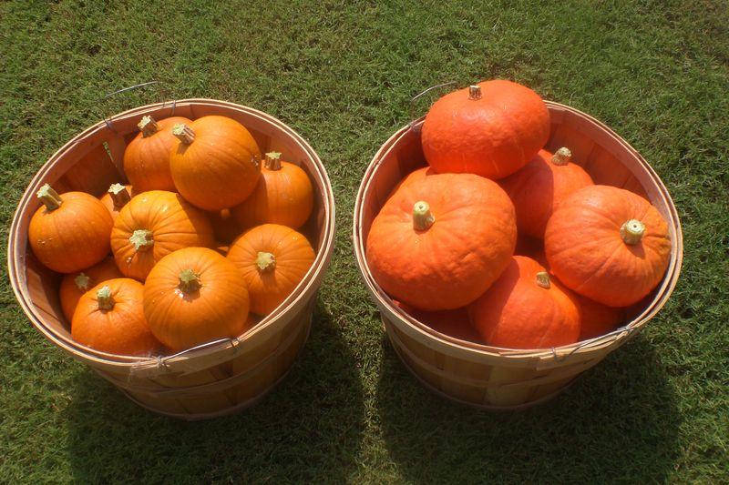 Kubocha&Pumpkin7-01-10