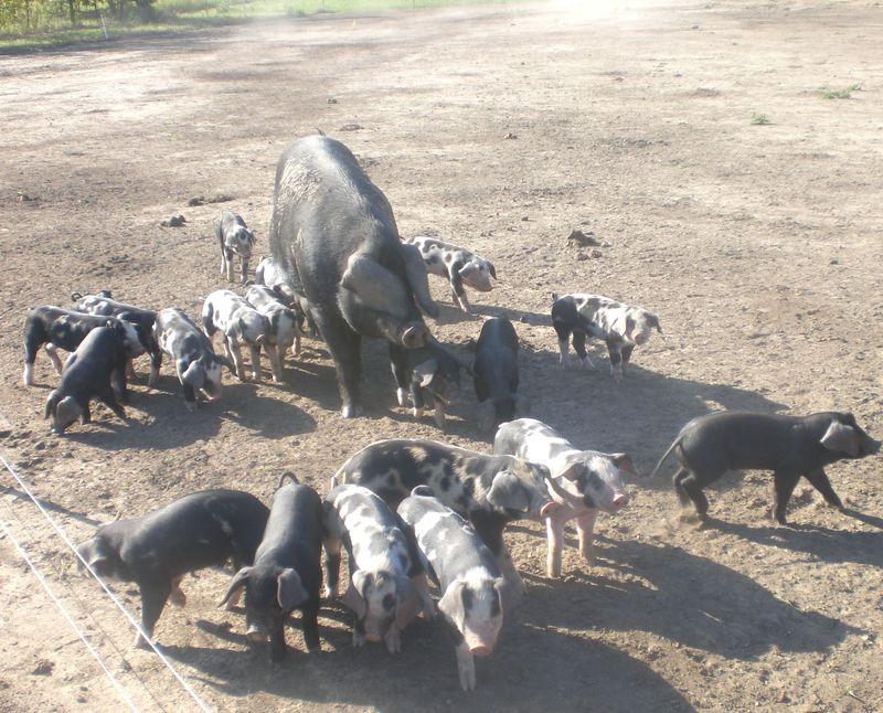 Geez&Pigs9-30-2010